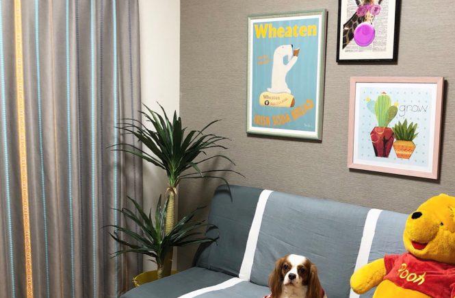 愛犬部屋インテリアコーディネート