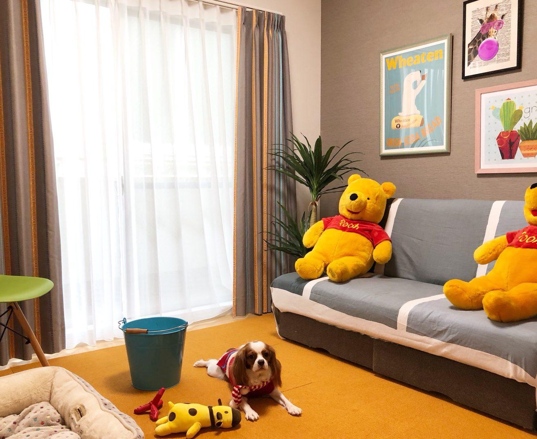 犬のお部屋コーディネート実例