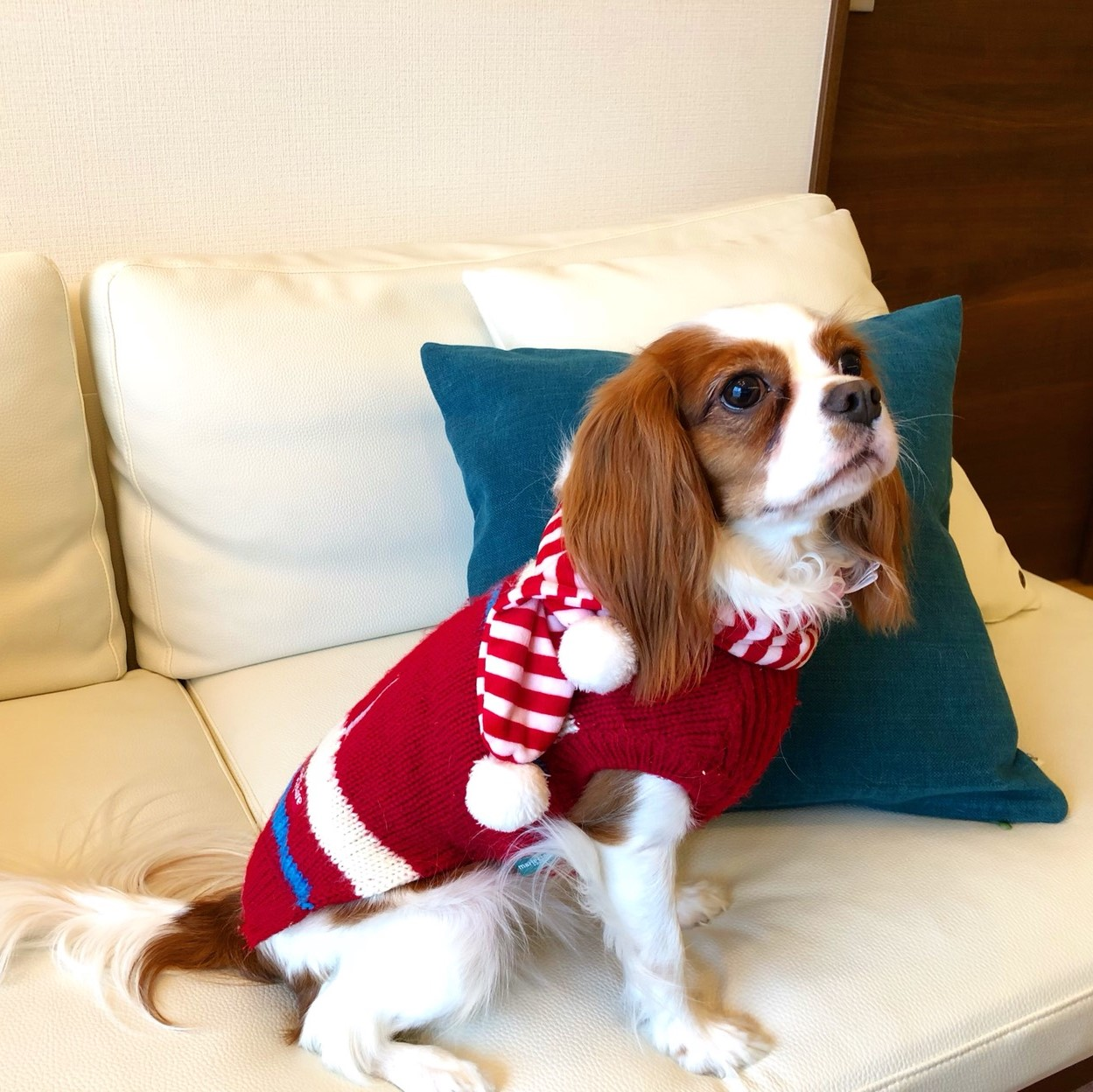 愛犬と暮らす家インテリアコーディネート